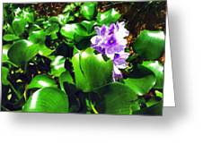 Lilac Pink Beauty Greeting Card