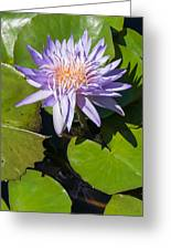 Lilac Water Lily Greeting Card
