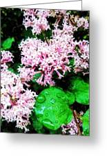 Lilacs After The Rain Greeting Card