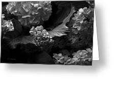 Lilacs And Hydrangeas Greeting Card
