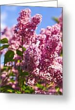 Lilacs Greeting Card by Elena Elisseeva