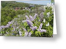Lilacs On The Hill Greeting Card