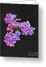 Lilacs - Perfumed Dreams Greeting Card