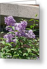 Lilacs Up Against The Wall Greeting Card