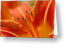 Lilies Heart Greeting Card