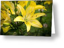 Lilies In The Sun Greeting Card