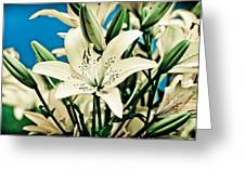 Lilies In White Greeting Card