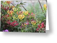 Lilies Of Color Greeting Card