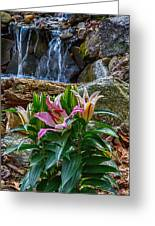 Lilies Of The Falls Greeting Card