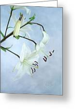 Lilies On Blue Greeting Card