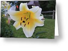 Lilies Pompei Greeting Card