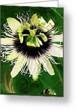Lilikoi Flower Greeting Card