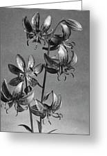 Lilium Hansonii Greeting Card