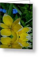 Lilium Of Gold Greeting Card