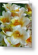 Lilium Regale Greeting Card