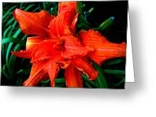 Lillie 2 Greeting Card