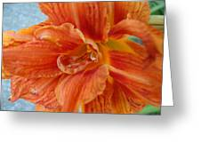 Lillie 3 Greeting Card