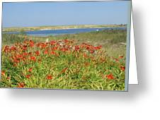 Lillies By The Lake Greeting Card