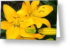 Lillies In Yellow Greeting Card