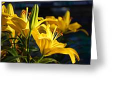 Lillies Of Gold Greeting Card