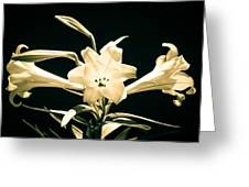 Lilly And Light Greeting Card
