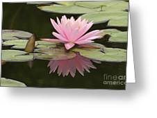 Lilly And Reflective Beauty Greeting Card