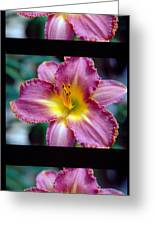 Lilly Blooming Vertical Greeting Card
