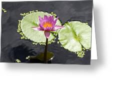 Lilly Lake Greeting Card