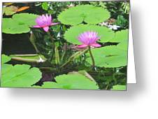 Lilly Pad In Hawaii Greeting Card
