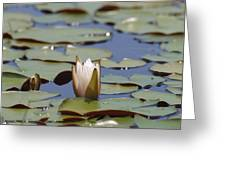 Lilly Pad With Bloom Greeting Card