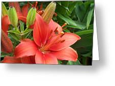 Lillys And Buds 1 Greeting Card