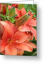 Lillys And Buds 3 Greeting Card