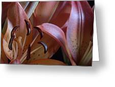 Lily 5 Greeting Card