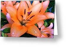 Lily After Rain Greeting Card