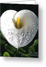 Lily After The Rain Greeting Card