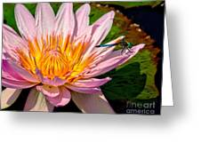 Lily And Dragon Fly Greeting Card by Nick Zelinsky