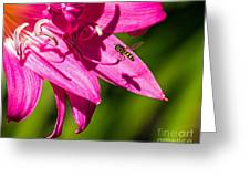 Lily And Fly Greeting Card