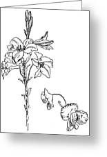 Lily And Poppy Flower Line Drawing Greeting Card