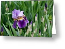 Lily And The Buds Greeting Card