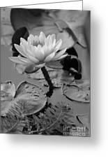 Lily Bw Greeting Card