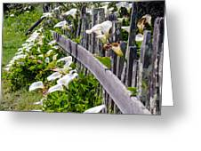 Lily Fence Greeting Card