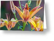 Lily From The Garden Greeting Card