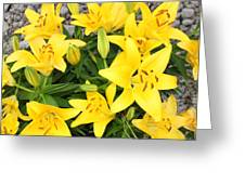 Lily Gathering Greeting Card