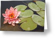 Lily Honey Greeting Card