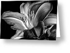 Lily In Black In White Greeting Card by Camille Lopez