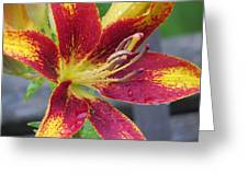 Lily In My Patio Greeting Card