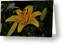 Lily In The Rain Greeting Card