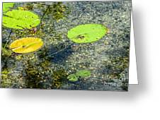 Lily Leafs On The Water Greeting Card