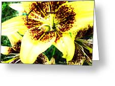 Lily Love Greeting Card