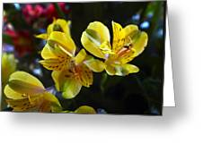 Lily Of The Incas Greeting Card